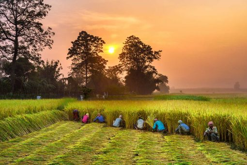 Chitwan_Nepal