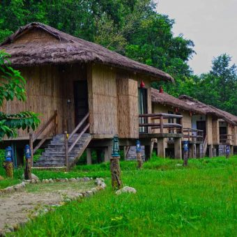 Temple Tiger – Green Jungle Resort